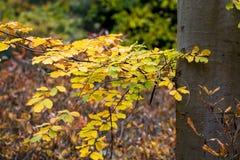 Drzewny bagażnik z jesienią coloured liście obrazy royalty free