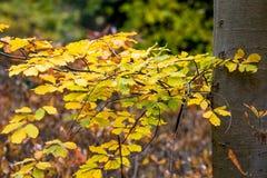 Drzewny bagażnik z jesienią coloured liście zdjęcie royalty free