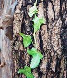 Drzewny bagażnik z liśćmi zdjęcia stock