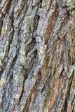 Drzewny bagażnik z mech wzoru tekstury tłem fotografia stock