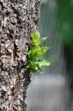 Drzewny bagażnik z zieleni flancą zdjęcie stock