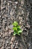 Drzewny bagażnik z zieleni flancą obrazy stock