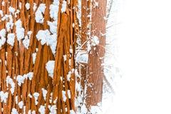 Drzewny bagażnik zakrywający w śniegu, z pokojem dla kopii przestrzeni, tekst na białym tle fotografia stock