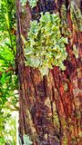 Drzewny bagażnik Obrazy Stock