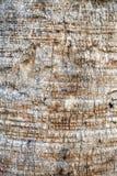 Drzewny bagażnik - drewno korowata tekstura Obrazy Stock