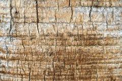 Drzewny bagażnik - drewno korowata tekstura Zdjęcia Royalty Free