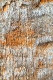 Drzewny bagażnik - drewno korowata tekstura Obrazy Royalty Free