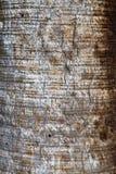 Drzewny bagażnik - drewno korowata tekstura Fotografia Stock