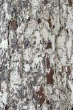 Drzewny bagażnik - drewno korowata tekstura Fotografia Royalty Free