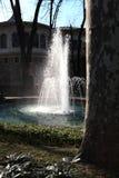 Drzewny bagażnik i fontanna Fotografia Stock