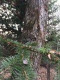 Drzewny bagażnik Natura w jesieni Zdjęcie Stock