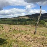 Drzewny bagażnik przed ogólnym irlandczyka krajobrazem obraz royalty free