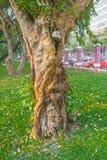 Drzewny bagażnik w parku Fotografia Stock