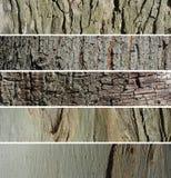 Drzewny bagażnika sztandaru set Obraz Stock