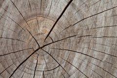 Drzewny bagażnik, przekroju poprzecznego drewna tło Obrazy Stock