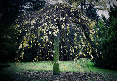 Drzewny baldachim obraz stock