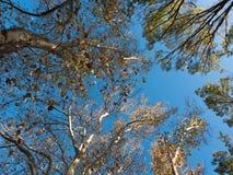 Drzewny Baldachim obrazy stock