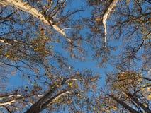 drzewny baldachim w Melbourne fotografia stock