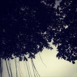 Drzewny baldachim w zmierzchu obrazy royalty free