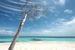 drzewny biel Zdjęcie Royalty Free