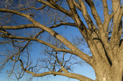 Drzewny Brannches Fotografia Royalty Free