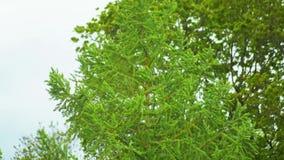 Drzewny chodzenie w wiatrze w zwolnionym tempie zdjęcie wideo