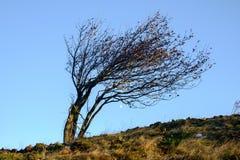 Drzewny chył silnymi wiatrami Obraz Stock