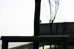 Drzewny ciało, bolus fotografia royalty free