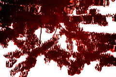 Drzewny cień zdjęcie stock