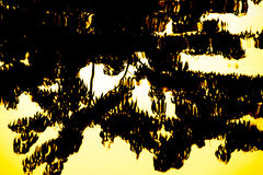 Drzewny cień zdjęcie royalty free