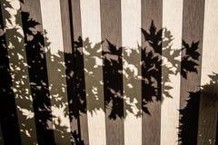 Drzewny cień na markizie, tło Zdjęcia Royalty Free