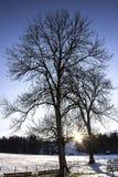 Drzewny cień Fotografia Stock