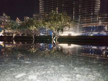 Drzewny cień Zdjęcia Royalty Free