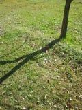 Drzewny cień Fotografia Royalty Free