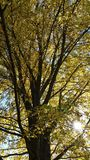 Drzewny cień Obrazy Royalty Free