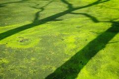 Drzewny cień Obraz Royalty Free