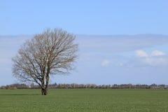 Drzewny czekanie dla swój liści Obrazy Stock