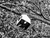 Drzewny dom dla ptaka obrazy royalty free