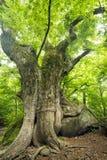 Drzewny dorośnięcie na kamieniu fotografia stock