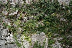 Drzewny dorośnięcie na kamieniu obrazy stock