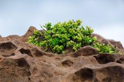 Drzewny dorośnięcie na rockowej falezie Obrazy Stock