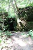 Drzewny dorośnięcie na skałach Fotografia Royalty Free