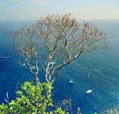 Drzewny dorośnięcie na skałach przed Liguryjskim morzem Cinque Terre Pięć ziemi park narodowy Włochy Zdjęcia Royalty Free