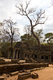 Drzewny dorośnięcie nad Ta Prohm świątynią fotografia stock