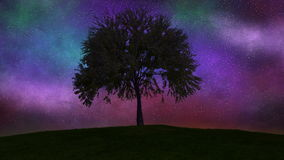 Drzewny dorośnięcie, upływ noc dzień 4K zdjęcie wideo