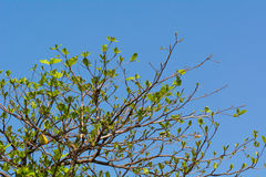 Drzewny dorośnięcie w jaskrawym dniu Obraz Stock