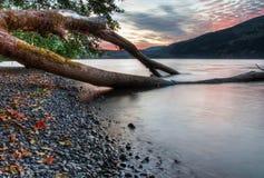 Drzewny Dorośnięcie w Jezioro z Zmierzchem w Tle zdjęcie royalty free