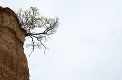 Drzewny dorośnięcie w kącie glebowa formacja w pustyni - aga Obrazy Royalty Free