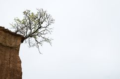 Drzewny dorośnięcie w kącie glebowa formacja w pustyni - aga Fotografia Stock