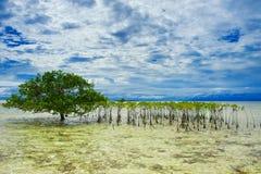 Drzewny dorośnięcie w morzu obrazy royalty free